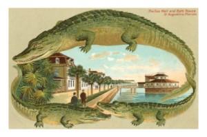 alligators-sea-wall-st-augustine-florida